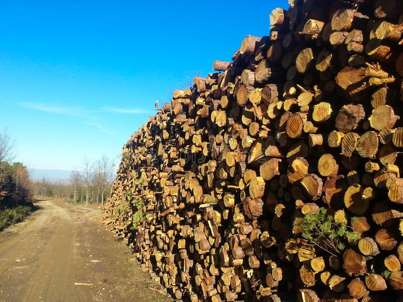 une pile de pin de rondins de la coupe naturelle fra?chement pour produire le bois de chauffage photographie stock libre de droits