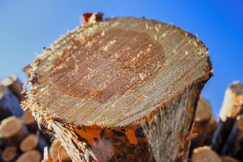 Une pile de rondins fraîchement sciés de pin au bord de la forêt photographie stock libre de droits