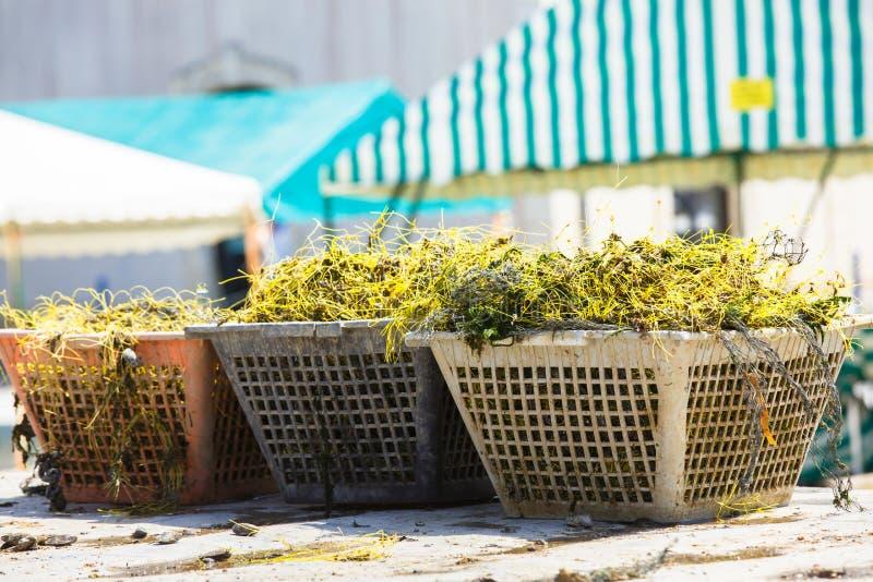 Une pile des filets de pêche rouges placés sur des pièges de homard photos stock