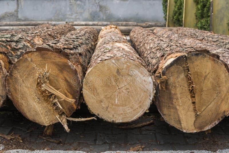 Une pile des rondins se trouvent sur une plate-forme de forêt, une scierie Traitement du bois de construction à la scierie photo libre de droits