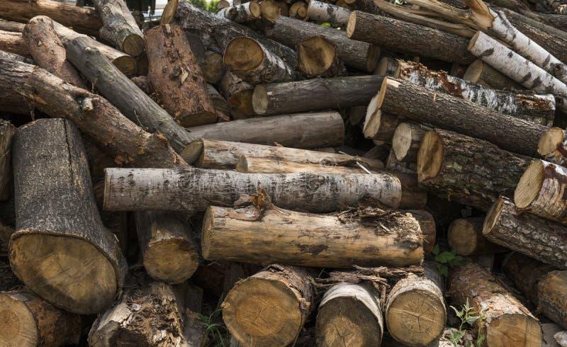 Une pile des rondins se trouvent sur une plate-forme de forêt, une scierie Traitement du bois de construction à la scierie image libre de droits