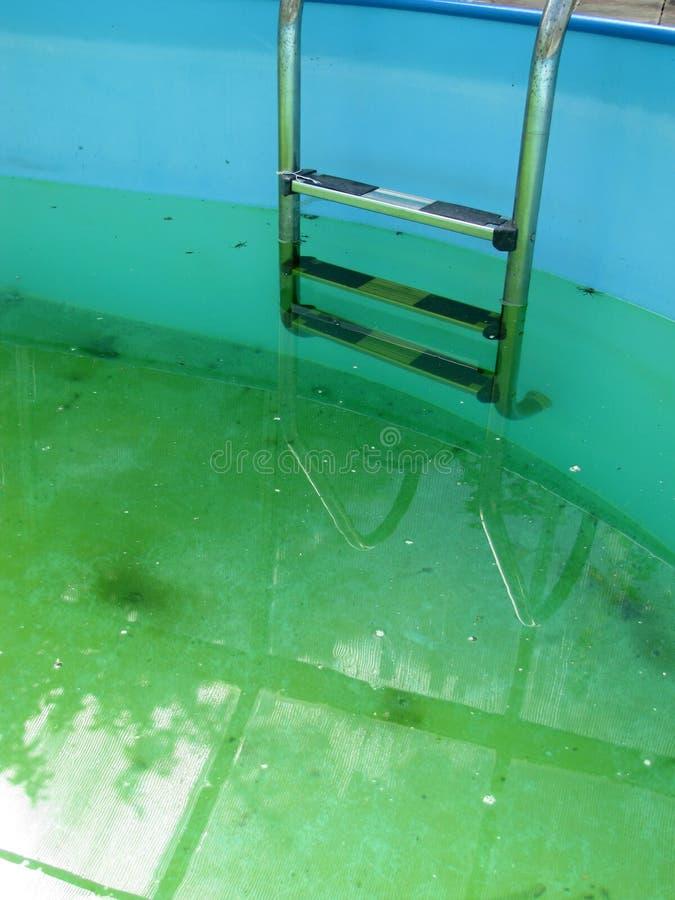 Une piscine d'inground avec les algues vertes dans l'eau image libre de droits