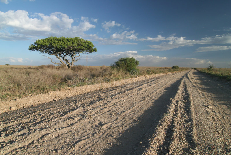 Une piste isolée de route dans la savane. images libres de droits
