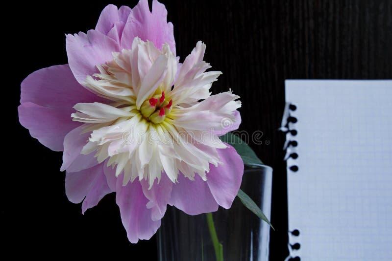 Une pivoine rose dans un verre sur un fond en bois noir avec une feuille de papier blanche photos stock