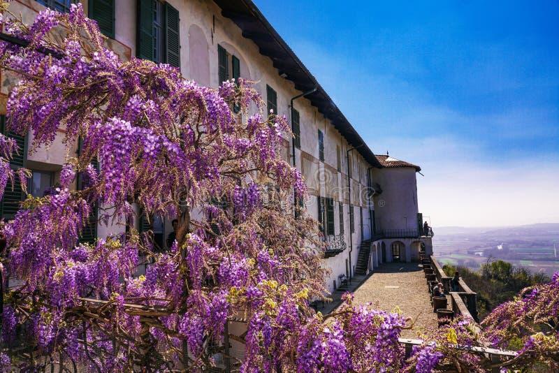 Une plante magnifique de glycine et fleurs du château de Masino images libres de droits