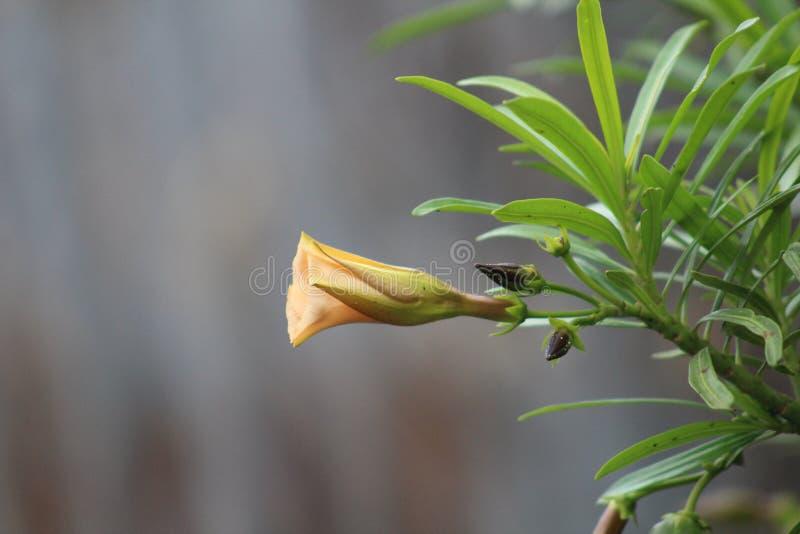 Une plante verte pendant une saison d'?t? photo stock
