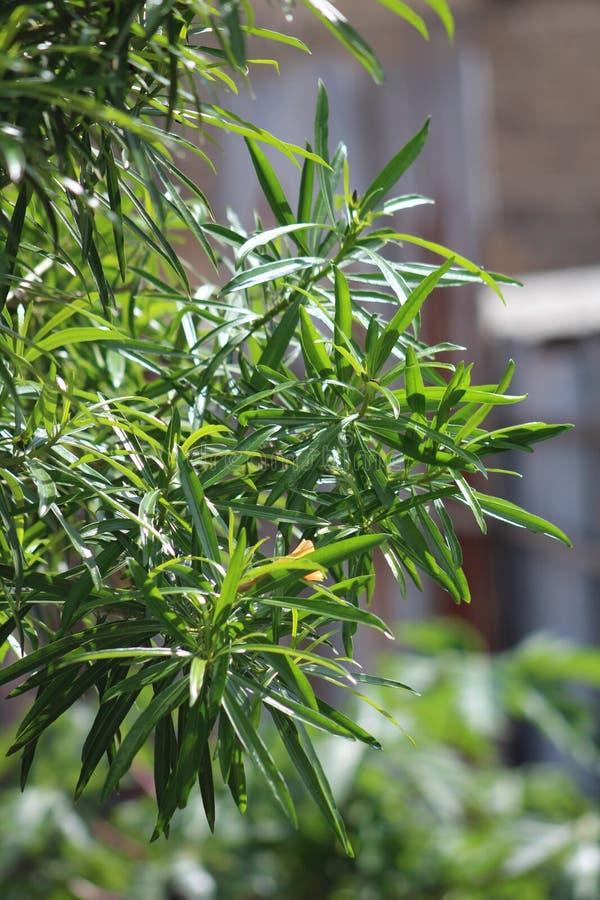 Une plante verte pendant une saison d'?t? photos libres de droits