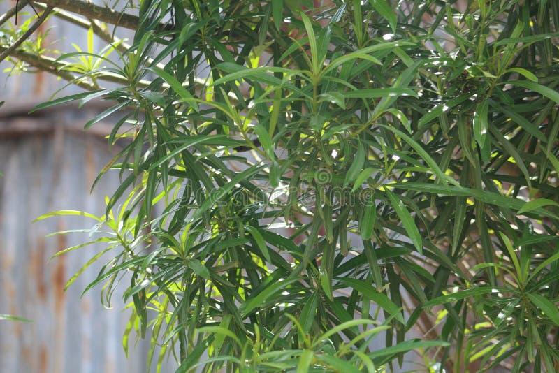 Une plante verte pendant une saison d'?t? image stock