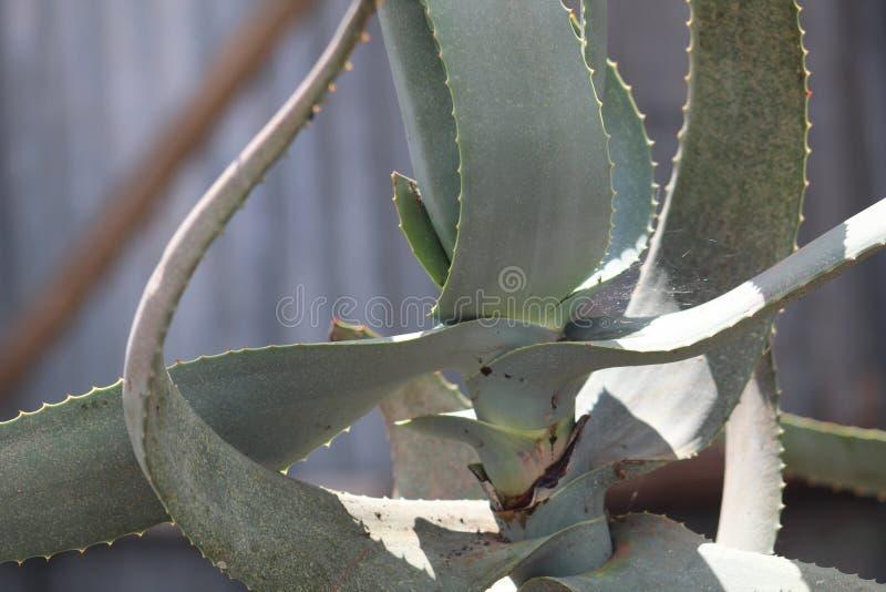 Une plante verte pendant une saison d'?t? images stock