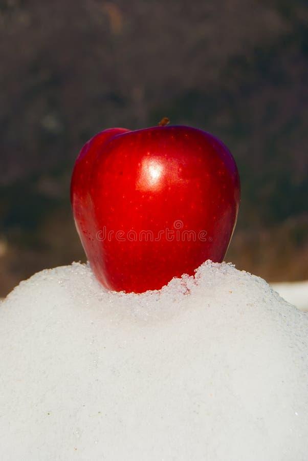 Une pomme rouge et entière sur la neige images stock