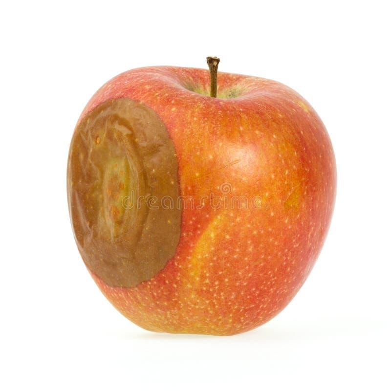 Une pomme rouge gâtée photos stock