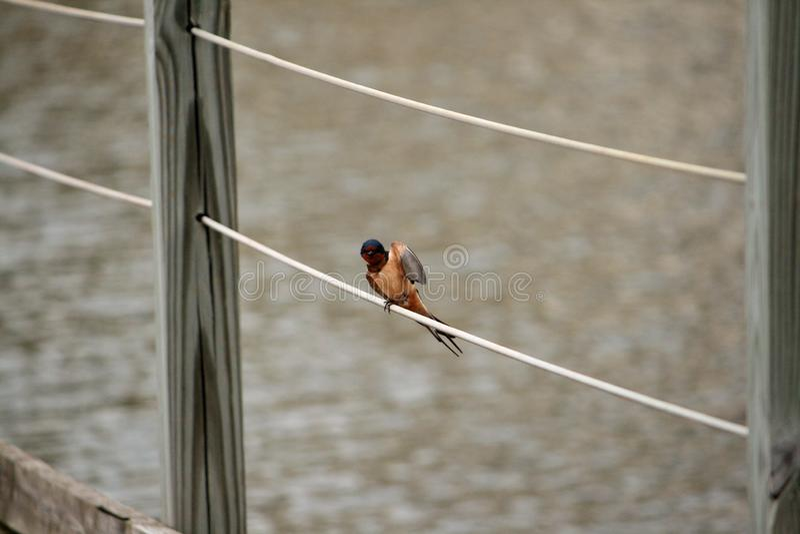 Une position d'oiseau sur un grillage photos libres de droits