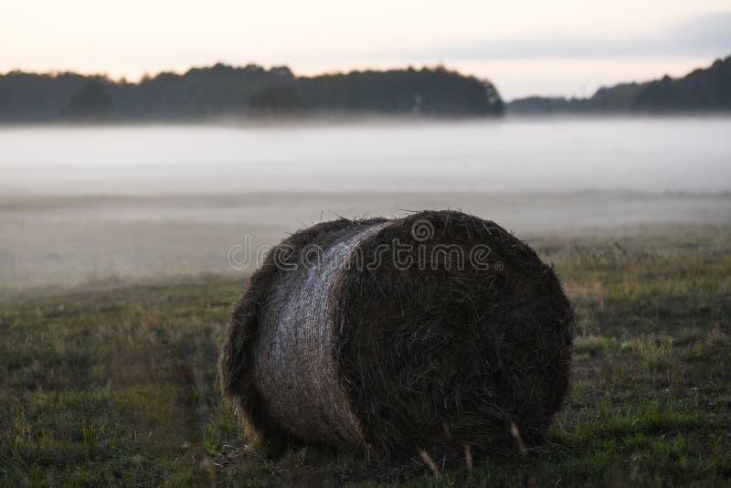 Une poubelle de grain sur le champ pendant le brouillard image stock