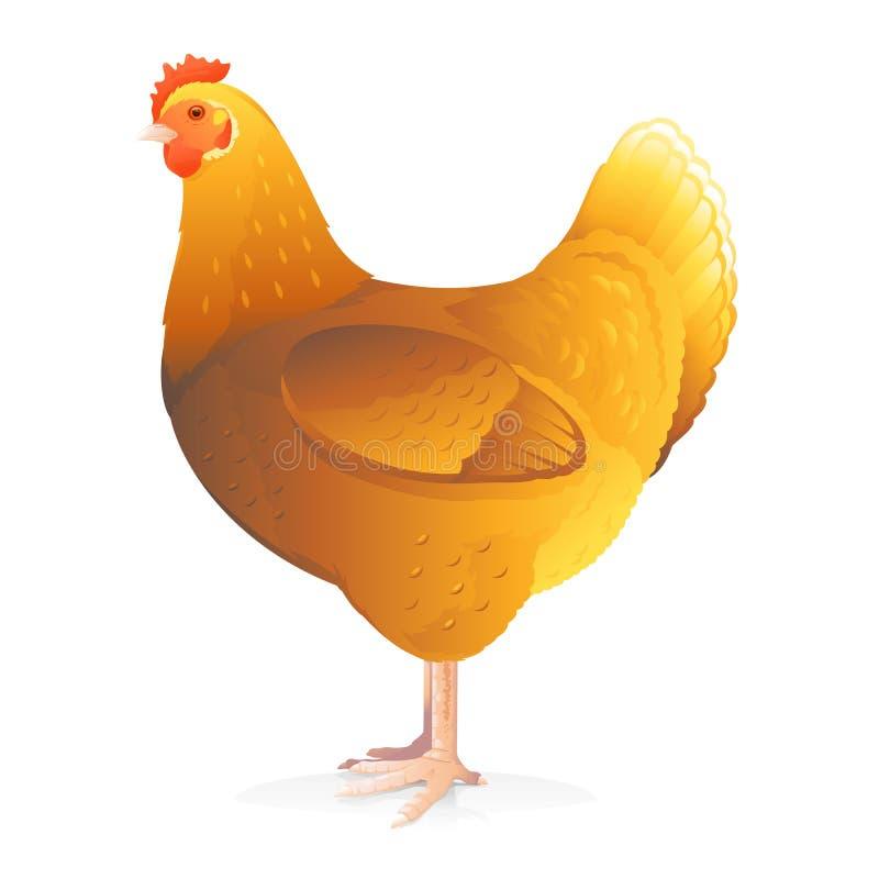 Une poule de Brown illustration stock