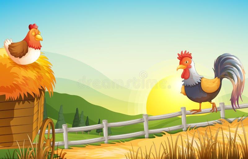 Une poule et un coq dans la ferme illustration stock
