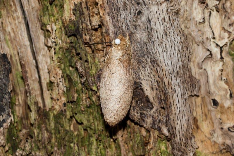 Une poupée de papillon raccrochant sur un arbre dans la fin image stock