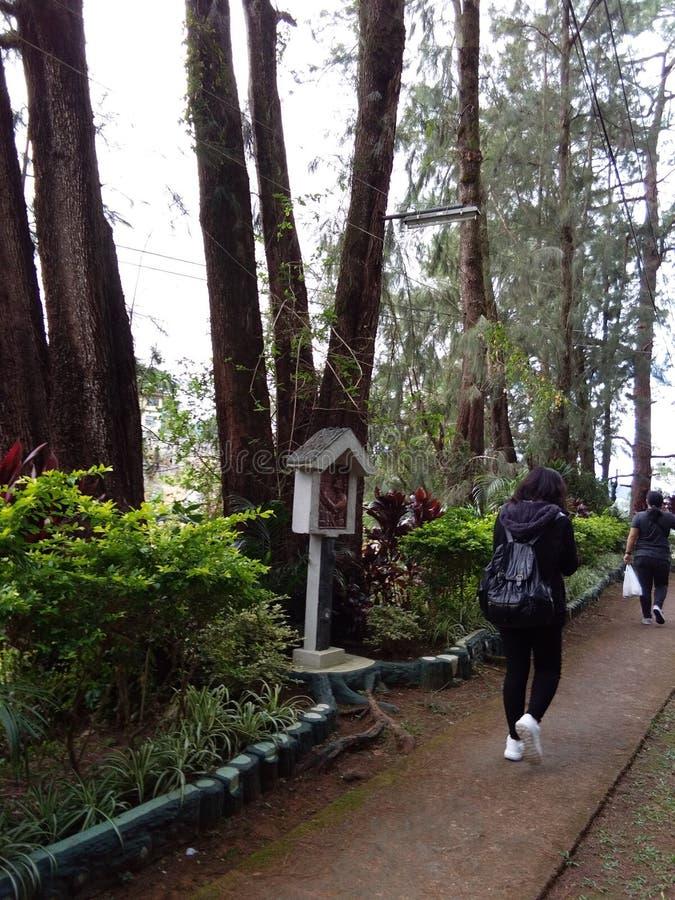 Une promenade dans les bois images stock