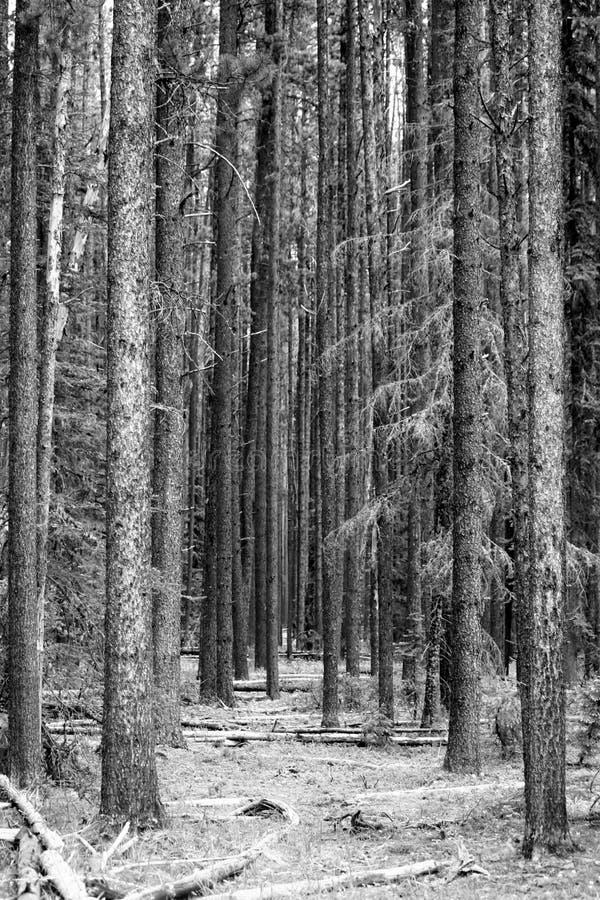 Une promenade par la forêt image libre de droits