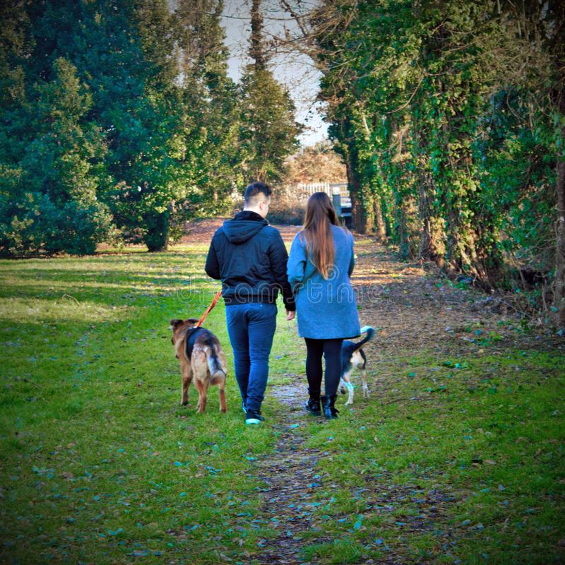 Une promenade romantique entre deux amants avec leurs chiens dans une rue bordée d'arbres photos stock