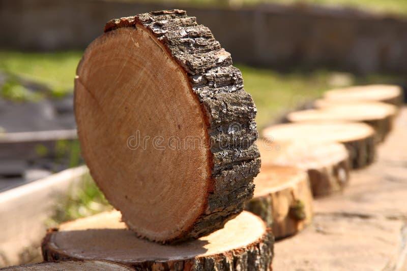 Une rang?e de rond a vu des coupes d'un arbre image libre de droits