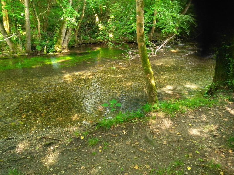 Une rivière dans la forêt d'arbres tordus images libres de droits