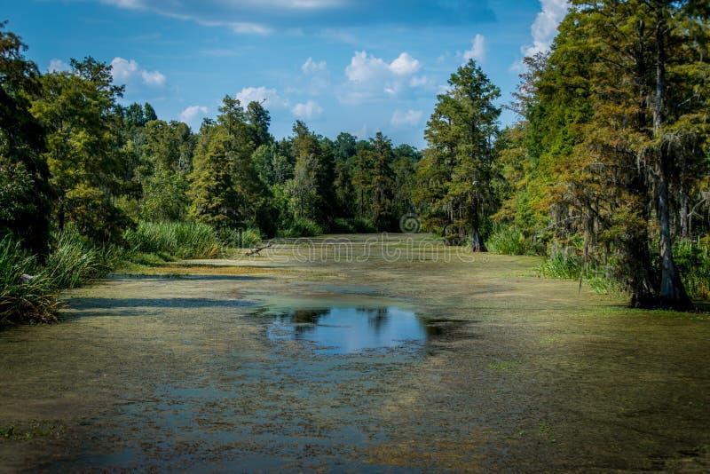 Une rivière marécageuse photo stock