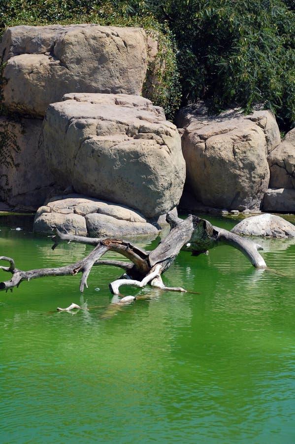 Une roche et une mer dans un zoo photos stock