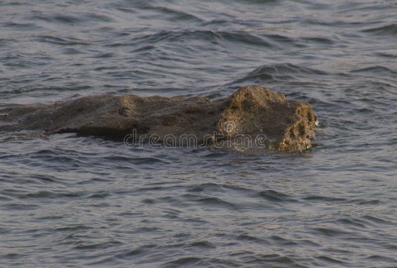 Une roche formée comme un animal image stock