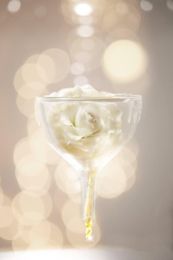 Une rose blanche dans l'entonnoir en verre image libre de droits