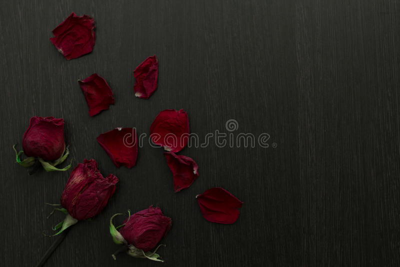 Une rose défraîchie et pétales de rouge sur le fond noir photographie stock