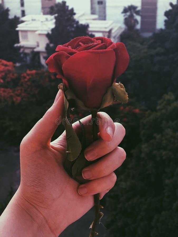 Une rose pour les belles âmes photo libre de droits