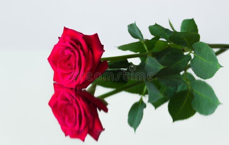Une rose rouge se trouvant sur la surface de miroir et sa réflexion photo libre de droits