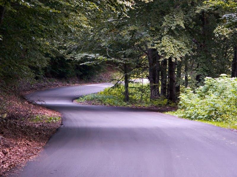 Une route dans une belle forêt photographie stock