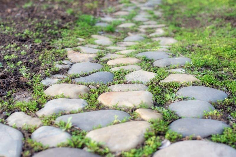Une route de jardin pavée avec les pierres naturelles entourées avec la jeune herbe photographie stock libre de droits