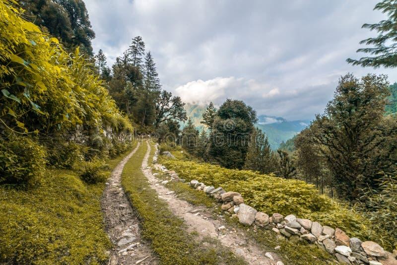 Une route moulue couverte d'herbe, de taillis avec des arbres sans feuilles et de nuages sur un ciel bleu image libre de droits