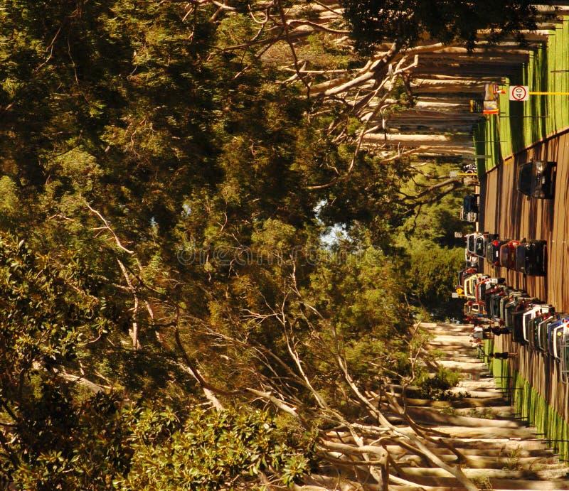 Une rue rayée par arbre photos libres de droits