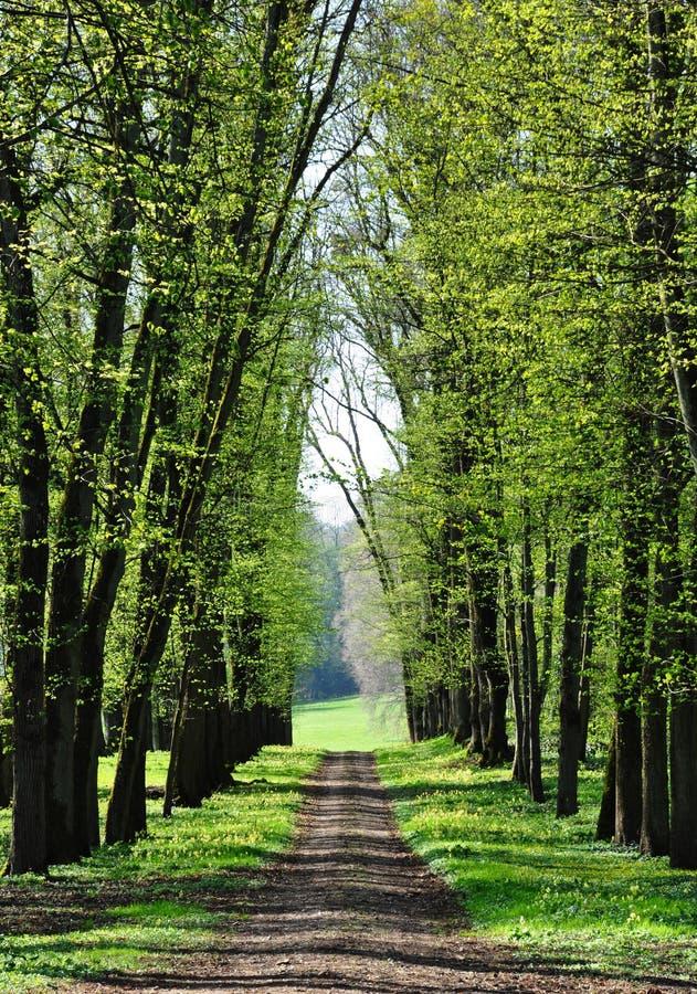Une ruelle au printemps photo libre de droits