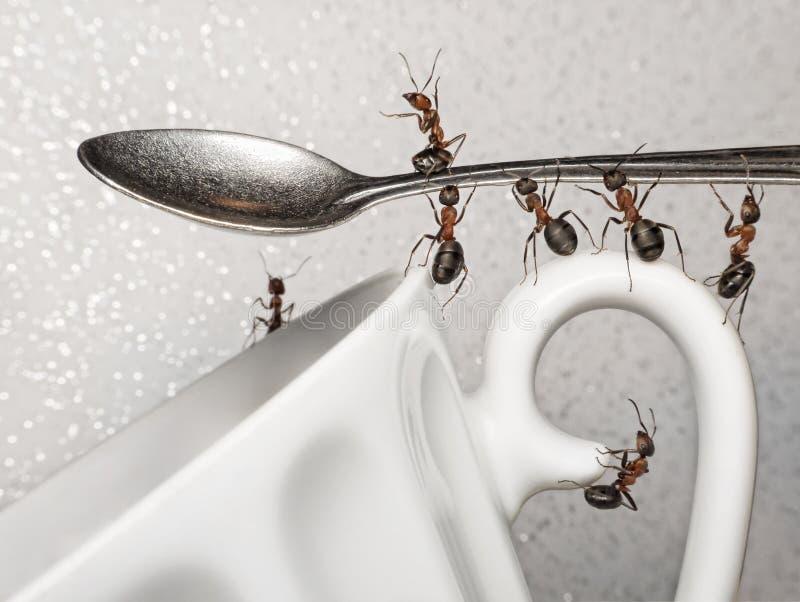 Une rupture, équipe des fourmis et cuillère au-dessus de cuvette de café images libres de droits