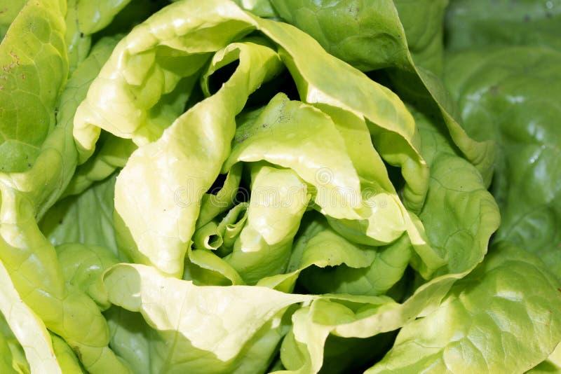 Une salade verte dans une vue supérieure plus étroite dans le jardin photos stock