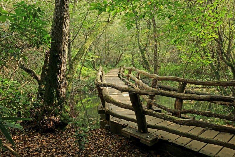 Une scène de région boisée avec un vieux pont et un sentier piéton par les arbres photos stock