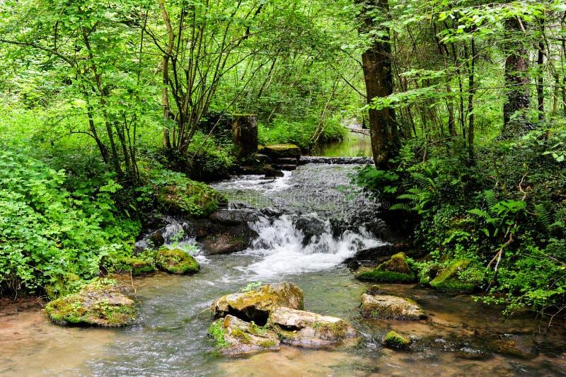 Une scène de rivière des beaux chemins de trekking de la région d'Ardennes photo libre de droits