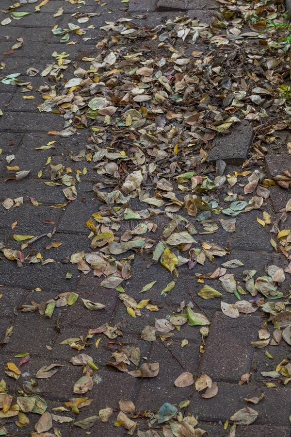 Une scène foncée et sombre de jour d'hivers avec les feuilles sèches photo libre de droits