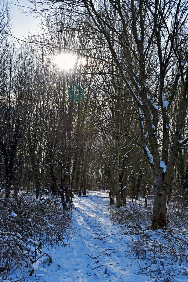 Une scène neigeuse de région boisée photographie stock