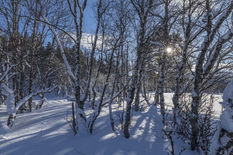 Une scène norvégienne d'hiver photographie stock libre de droits