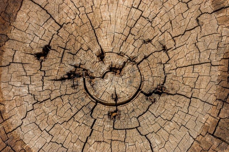 Une seule vieille, usée, superficielle par les agents section de bois avec les boucles criquées et une texture détaillée étonnant photo stock