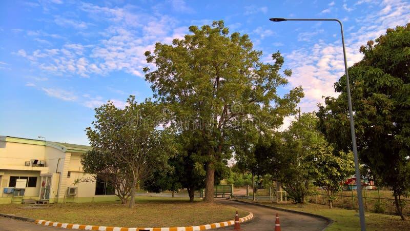 Une sortie sous le grand arbre photographie stock libre de droits