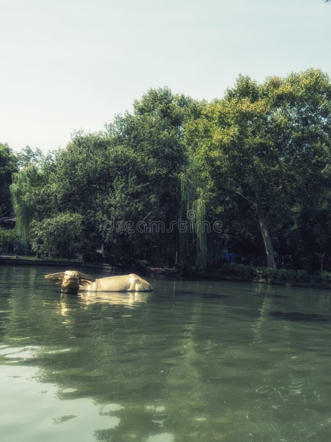 Une statue de buffle d'eau dans le lac occidental, Hangzhou Chine photographie stock