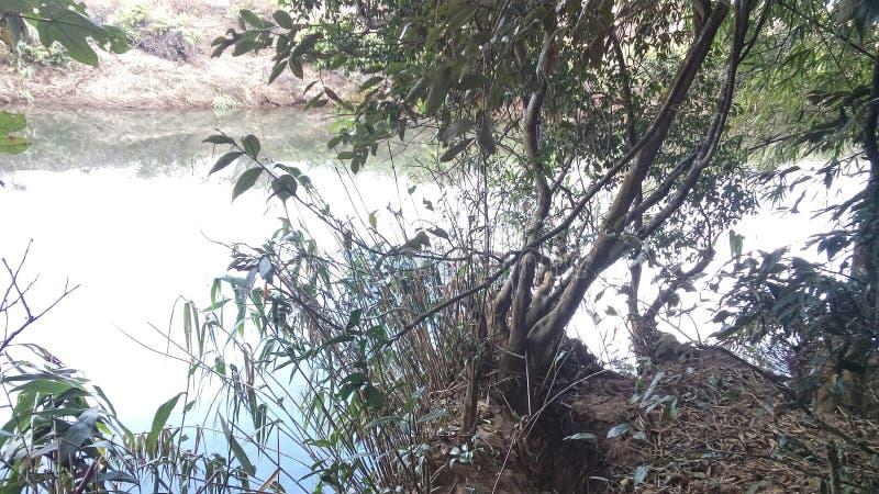 Une tache de pêche dans la forêt photographie stock libre de droits