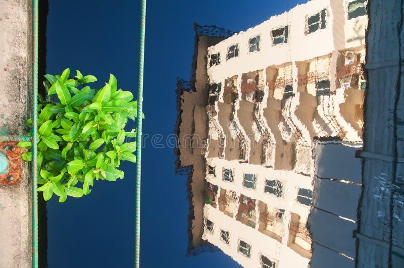 Une tache verte dans la ville urbaine, vue courbe d'un petit arbre vert au-dessus de canal bleu image stock