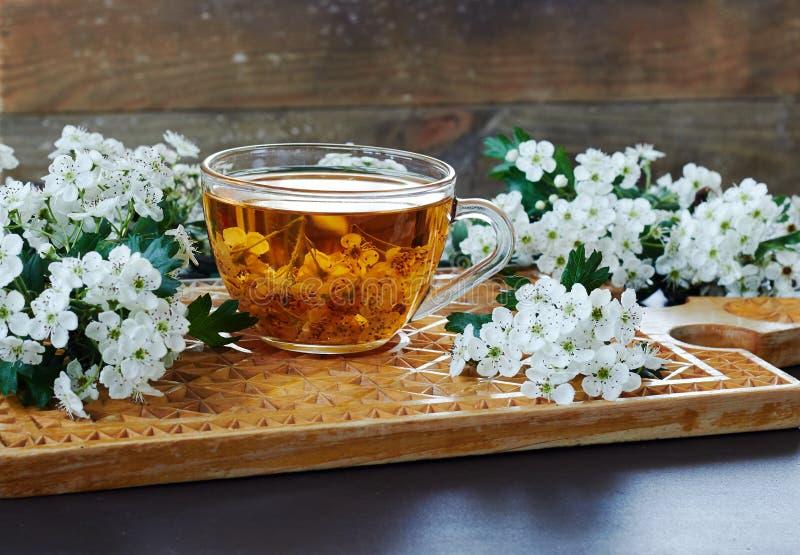 Une tasse de thé floral de fines herbes des bourgeons d'arbre d'épine de baie d'aubépine photographie stock libre de droits
